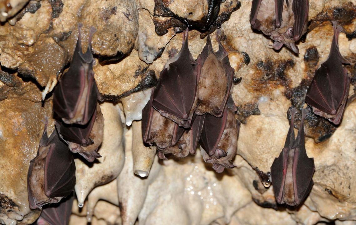 Ilam- Grotta dei pipistrelli