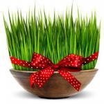 Arriva il Nowruz; Il Capodanno Persiano