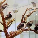 Tehran - Mûzemezek Naturalist and Wildlife