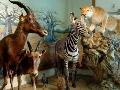 Музей естествознания и дикой природы