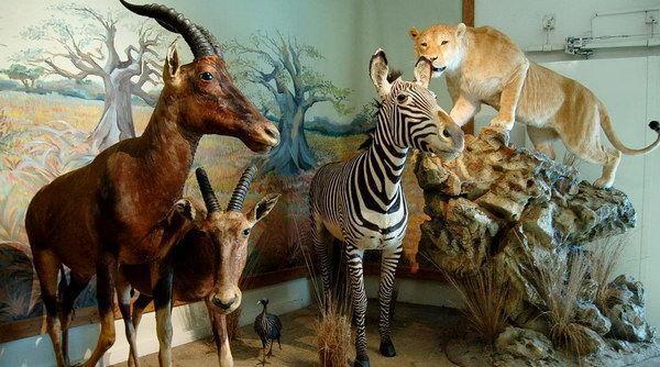 Museo Naturalistico e di Fauna Selvatica