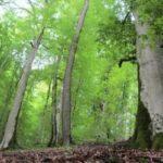 غابات بحر قزوين Ircese المختلطة هي موقع تراث عالمي