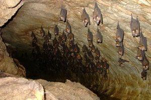 Бачве пећине
