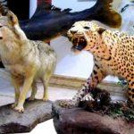 Тэгеран - Музей натуралістыкі і дзікай прыроды