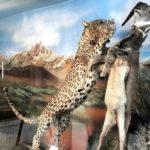 Τεχεράνη - Μουσείο Φυσικοκρατίας και Άγριας Ζωής