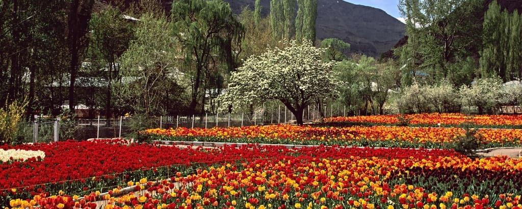 Giardino dei tulipani di Gachsar